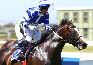 Home grown sires to shine at Cape Sale