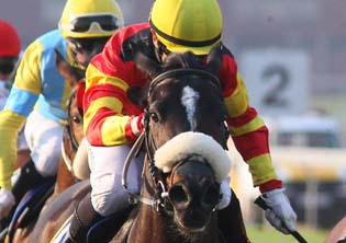 Fly By Night tops Cape sale