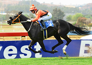 Querari Falcon the runner to beat, says Azzie