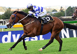 Tarry has big hand for the Guineas