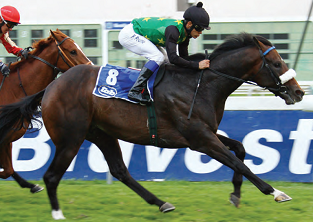 Marcus and Strydom set for a Turbulent battle