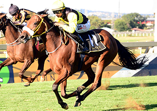 Be quick and clever, go for Dalley at Vaal