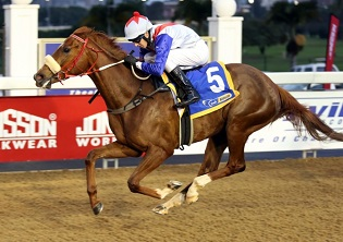 Onesie looking ready for Greyville's No 1 box