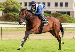 Sun Met champ Whisky Baron begins his overseas campaign