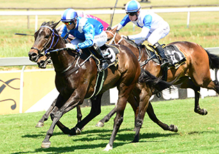 Jazaalah the 'nap' at Vaal