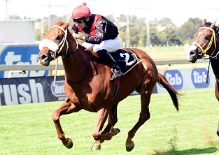 Coral Fever: Horse of Season