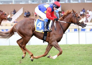 Highveld Hawks look to retain Rider Cup title