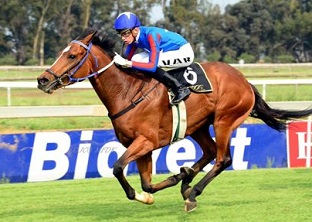 Panther on the prowl at Vaal