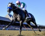 Red-hot Arrogate set to soar into the record books
