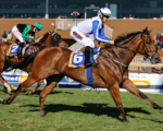 Count on Monte Christo at Greyville