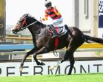 PE horse fancied for Dingaans