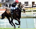 Good bets on Turffontein card