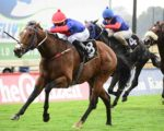 Gelded Wonderwall to excel in the wet