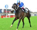 Hawwaam to run in Derby