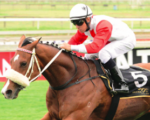 Watch Dorrie Sham at Vaal