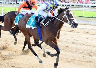 Best field yet for R1-m Emerald Cup