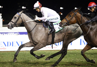Bela-Bela gets thumbs-up from trainer for Woolavington
