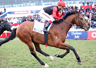 Strydom to ride Zodiac Ruler